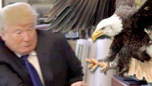 eagle attacks trump
