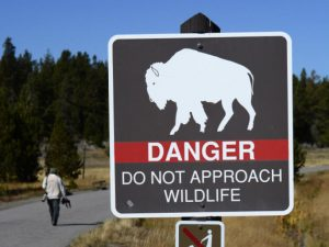 bison-on-sign-getty