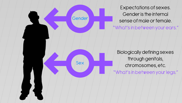 a comparison of the differences between sex and gender Ebscohost serves thousands of libraries with premium essays, articles and other content including sex and gender similarities and differences in communication values in same-sex and cross-sex friendships.