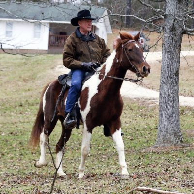 #AlabamaSenate: Roy Moore Rode A Horse And Other Plot Twists [VIDEO]