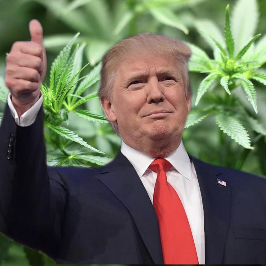 Should Trump Support Legalizing Marijuana? [video]